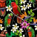 Pássaros exóticos e flores bonitas Fotos de Stock Royalty Free
