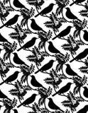 Pássaros. Fundo sem emenda. Fotografia de Stock Royalty Free