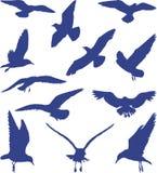 Pássaros, gaivotas em silhuetas azuis, vetor Fotografia de Stock Royalty Free