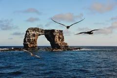 Pássaros grandes agradáveis que voam sobre o arco no Oceano Pacífico Fotos de Stock Royalty Free