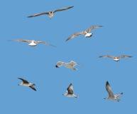 Pássaros isolados Imagem de Stock