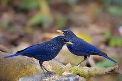 Pássaros junto Imagem de Stock