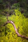 P?ssaros livres em seu habitat natural fotos de stock