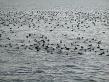 Pássaros na água Foto de Stock