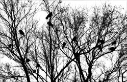 Pássaros na árvore Imagens de Stock Royalty Free