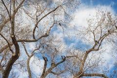 Pássaros na árvore Fotografia de Stock