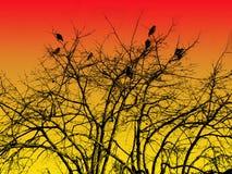 Pássaros na árvore Imagem de Stock