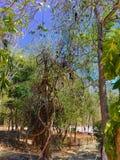 Pássaros na árvore Imagens de Stock