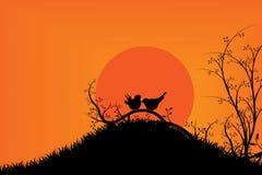 Pássaros na árvore durante o por do sol & o céu alaranjado Fotografia de Stock