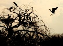 Pássaros na ação Fotos de Stock