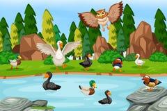 Pássaros na cena do lago ilustração royalty free