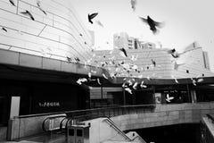 Pássaros na cidade fotos de stock