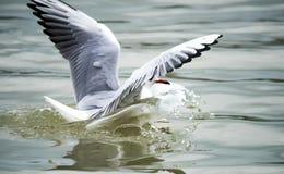 Pássaros na cidade Grandes fotos dos pássaros Fotos de Stock