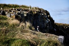 Pássaros na costa do sul imagem de stock royalty free