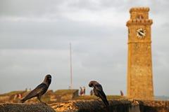 Pássaros na frente da torre do forte do Unesco Galle em Sri Lanka Foto de Stock Royalty Free