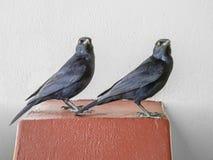 Pássaros na frente de uma parede Fotos de Stock