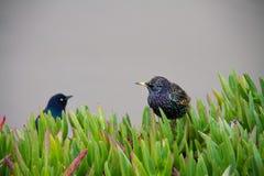 Pássaros na grama Foto de Stock