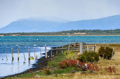 Pássaros na ilha, Puerto Natales, Patagonia, o Chile imagens de stock royalty free