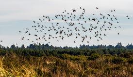 Pássaros na migração para o inverno Foto de Stock