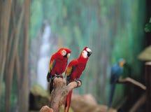 Pássaros na natureza fotografia de stock