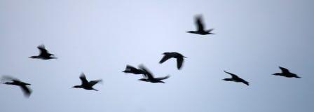 Pássaros na noite Fotos de Stock Royalty Free