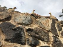 Pássaros na parede Imagens de Stock