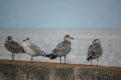 Pássaros na parede Imagem de Stock