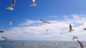 Pássaros na praia vídeos de arquivo