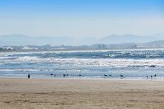 Pássaros na praia Imagens de Stock