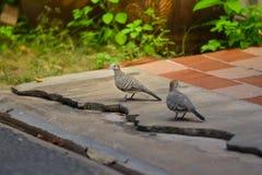 Pássaros na rua Imagens de Stock