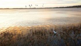 Pássaros na terra e no ar na montagem Dora, Florida imagens de stock royalty free