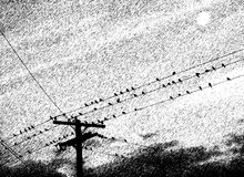 Pássaros na vara Foto de Stock