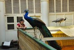 Pássaros nacionais Fotografia de Stock