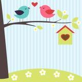 Pássaros no amor Fotografia de Stock