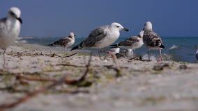Pássaros no beira-mar vídeos de arquivo