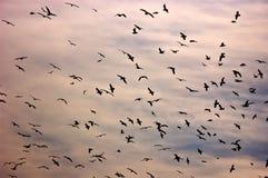 Pássaros no céu Imagens de Stock