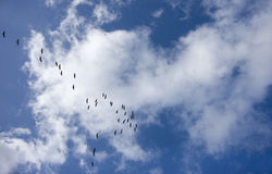 Pássaros no céu Imagem de Stock Royalty Free