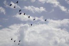 Pássaros no céu Fotografia de Stock Royalty Free