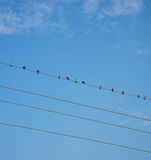 Pássaros no céu azul do fio Fotos de Stock Royalty Free