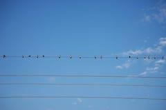 Pássaros no céu azul do fio Fotografia de Stock