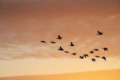 Pássaros no céu do por do sol Imagens de Stock