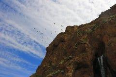 Pássaros no céu perto da cachoeira Fotos de Stock Royalty Free