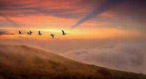 Pássaros no conceito do outono do nascer do sol ou do por do sol Imagens de Stock Royalty Free