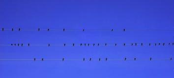 Pássaros no fio Foto de Stock Royalty Free
