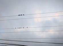 Pássaros no fio fotografia de stock royalty free