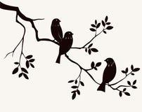 Pássaros no galho Fotografia de Stock