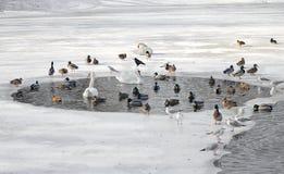 Pássaros no inverno. Fotografia de Stock