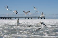 Pássaros no inverno imagens de stock