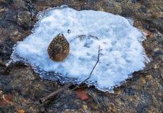 pássaros no inverno onde o pato selvagem se senta em uma ilha do gelo no meio do rio Fotografia de Stock Royalty Free