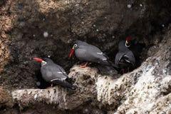 Pássaros no jardim zoológico de Bronx Fotos de Stock Royalty Free